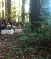 Sean shooting with the Dana Dolly in the Redwoods